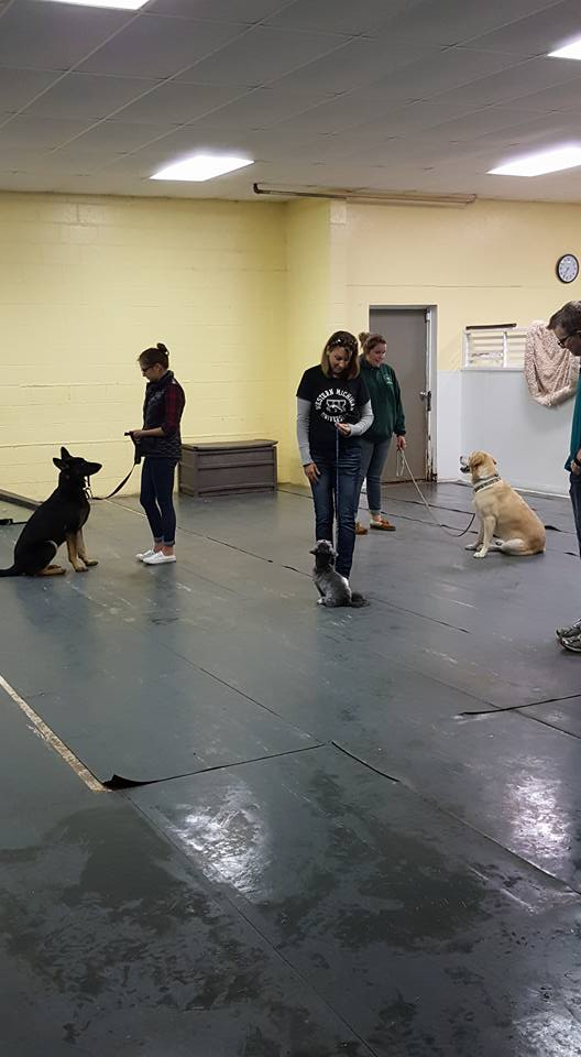 Dog group classes