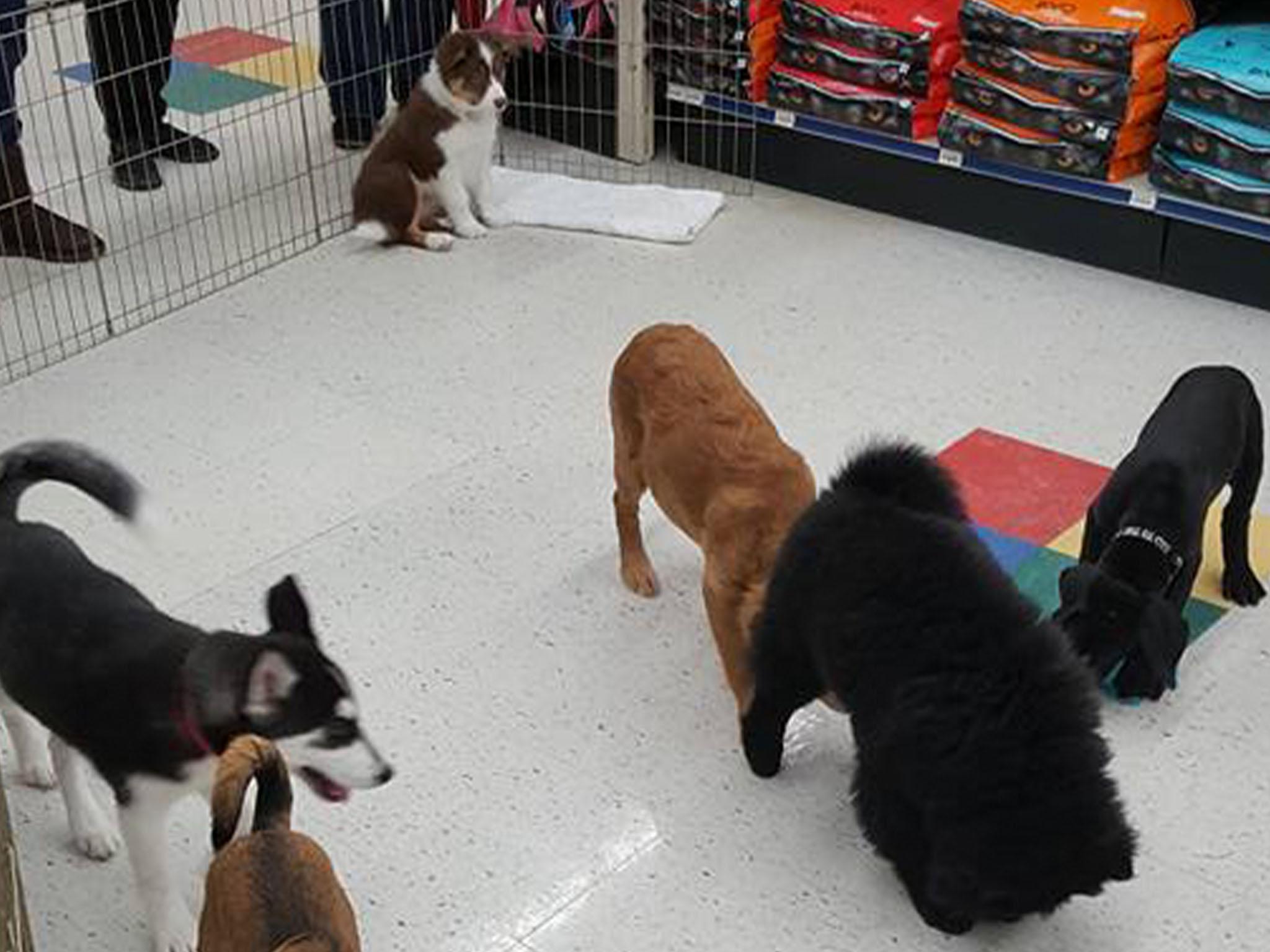 Puppy Parties