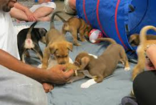 Puppy Social Party